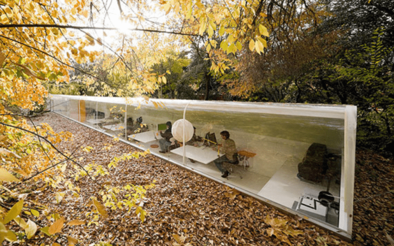 glass office in a forest